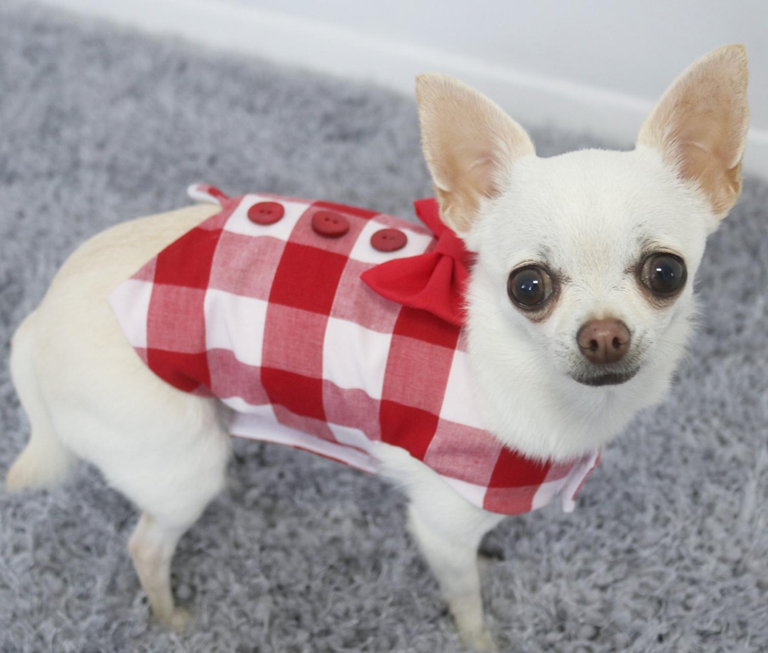dog waistcoat