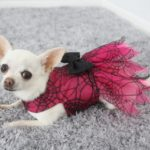 Pink and black lace halloween dog dress
