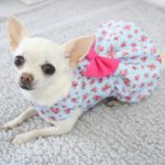 dog dress in pale blue and pink floral print