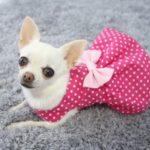 dark pink and white polka dot dog dress
