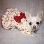 dog dress with gingerbreadman print