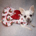 White robin print christmas dog dress