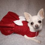 sparkly red christmas dog dress