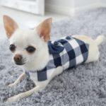 navy and white checkered dog waistcoat