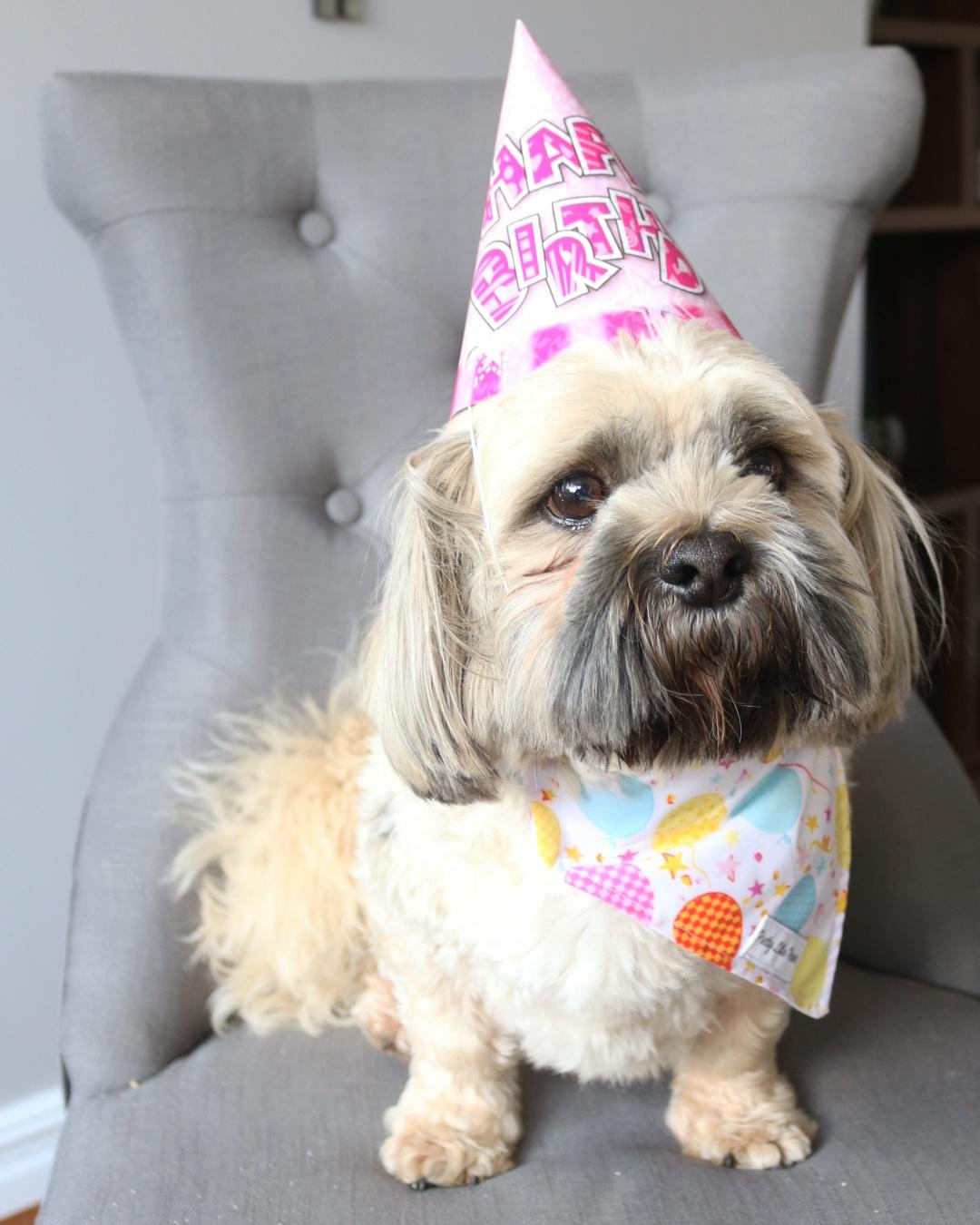 Birthday Design Slide On Collar Dog Bandana Pretty